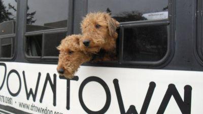 Bow Wow Buss Pet Dog Friendly