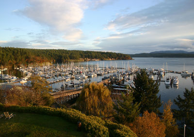 Overlooking Friday Harbor