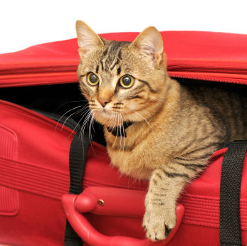 Cat in suitcase heading to the San Juan Islands